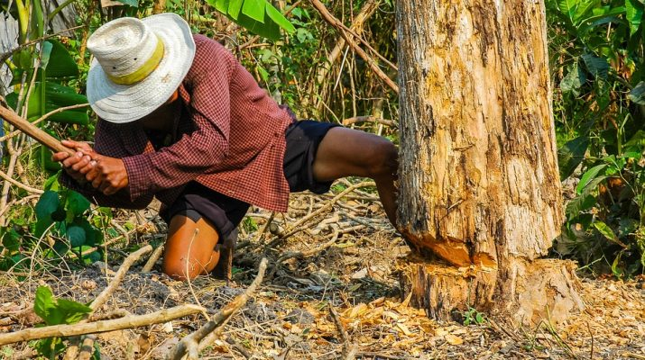 lumberjack-199693_960_720